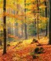 Teaching Gratitude in the Month of November